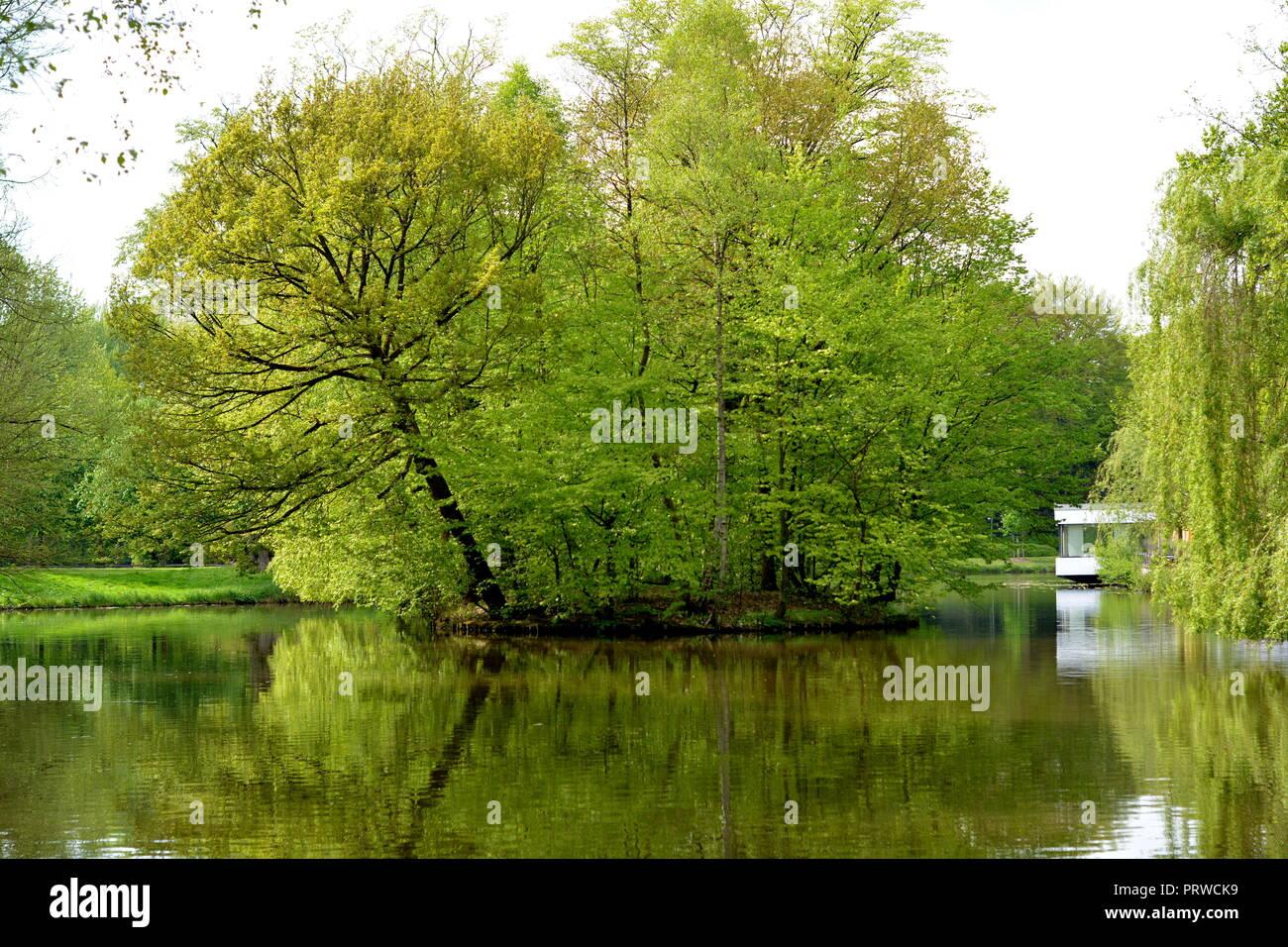 Baum   Wasser    Insel     Hintergrund - Stock Image