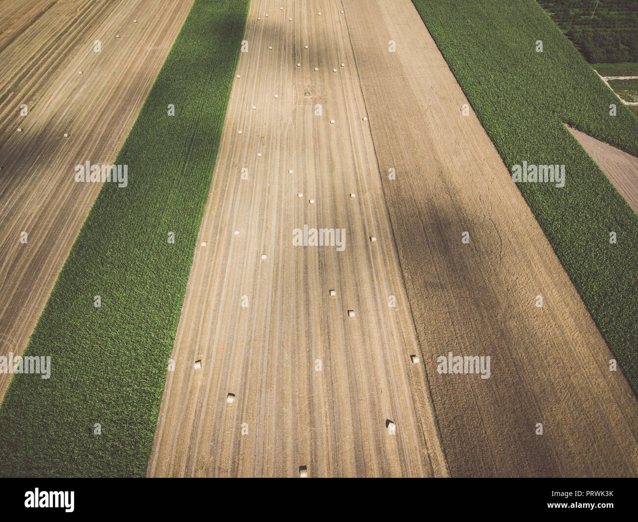 Aerial view of round hay bales on stubble under blue cloudy sky, diminishing perspective - Stock Image