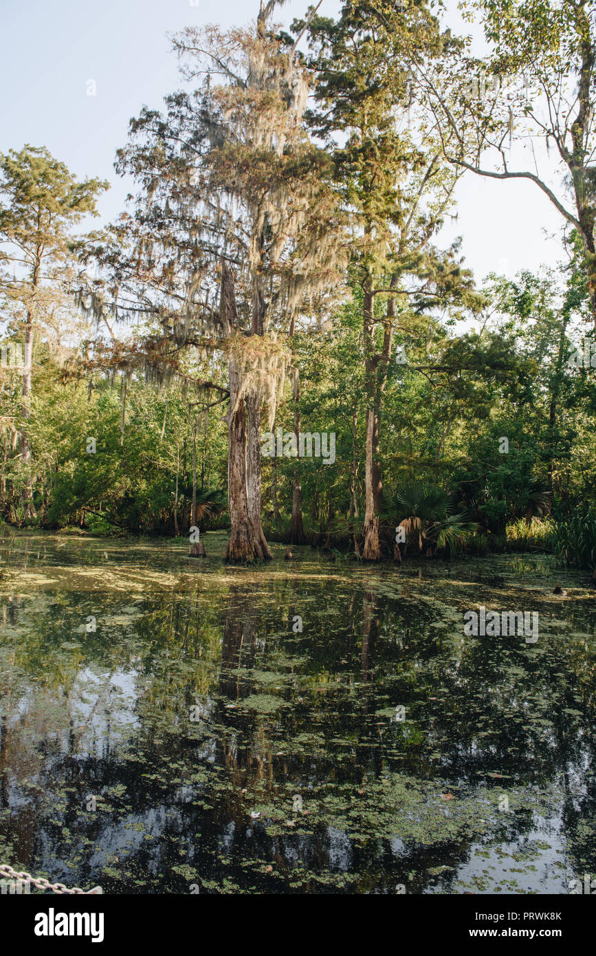 Swamp Tour in New Orleans - Stock Image