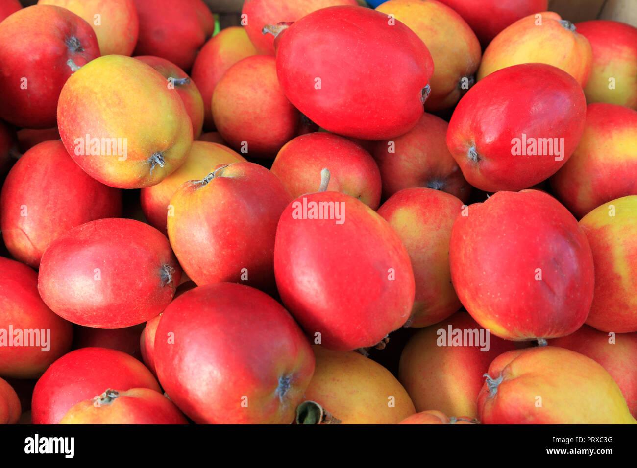 Apple, 'Oakham Pippin', apples, malus domestica, farm shop, display, edible, fruit - Stock Image