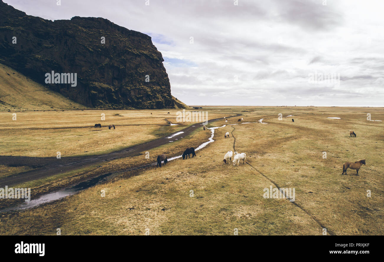 Icelandic green hills and panoramas. Aerial shots with horses - Stock Image