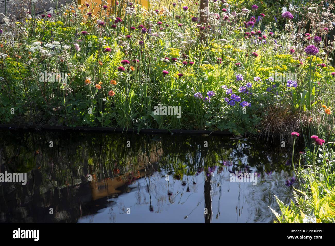 Dark reflective pool, meadow style planting of Allium hollandicum 'Purple Sensation', Cirsium rivulare 'Atropurpureum', Geum 'Totally Tangerine', Myrr - Stock Image