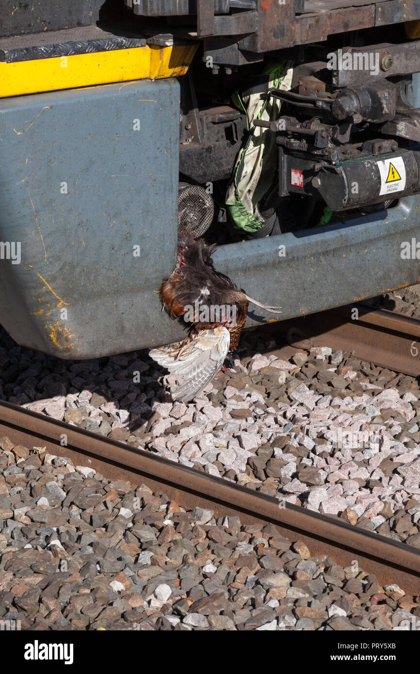 Hit By Train High Resolution Stock Photography And Images Alamy