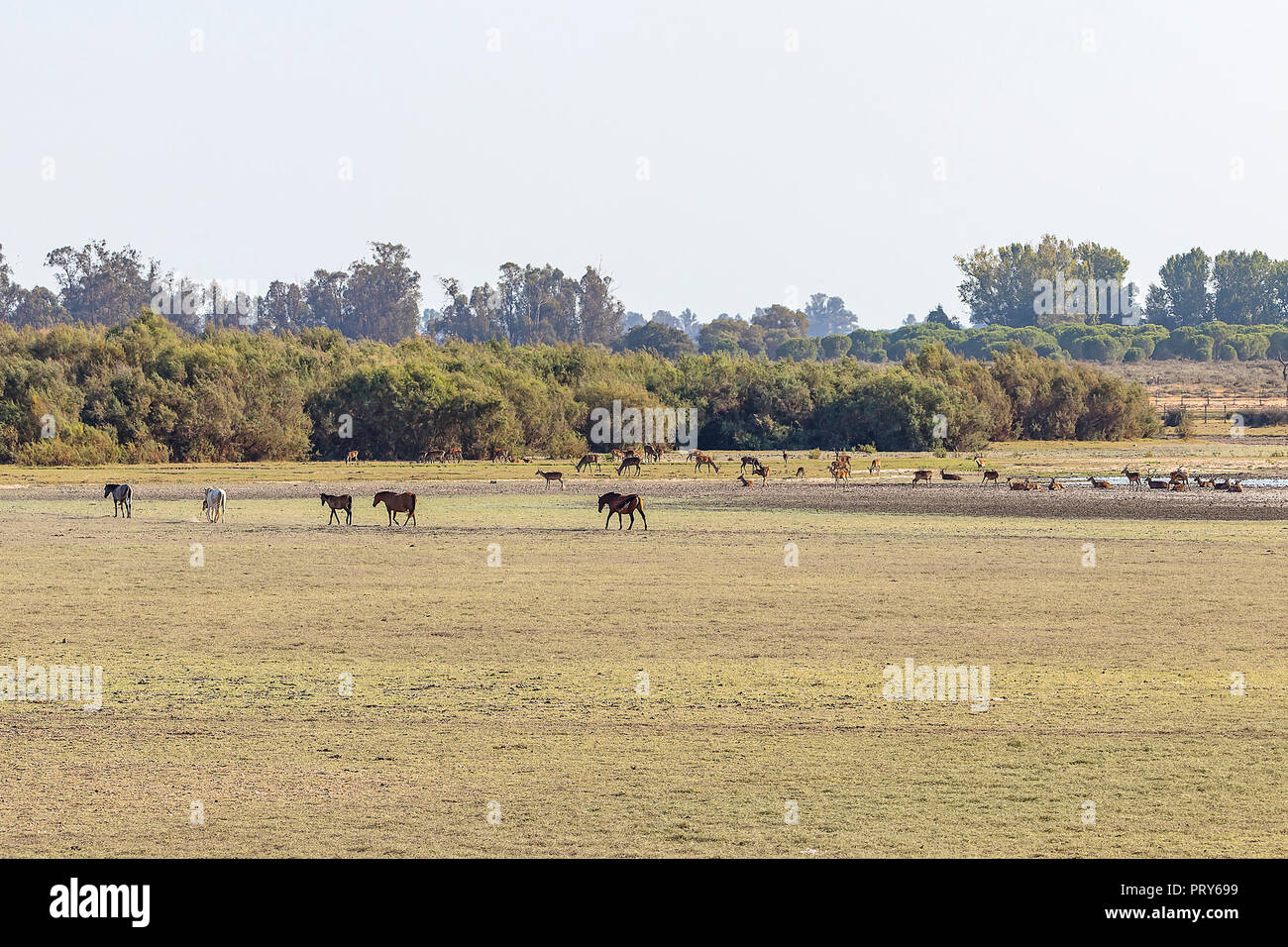 Mating Horses Stock Photos & Mating Horses Stock Images - Alamy