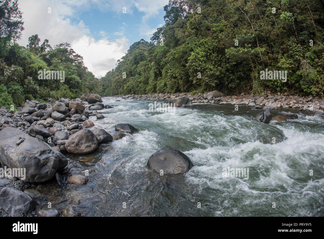 A high altitude river flowing through the cloud forest in Manu National Park, Peru. - Stock Image