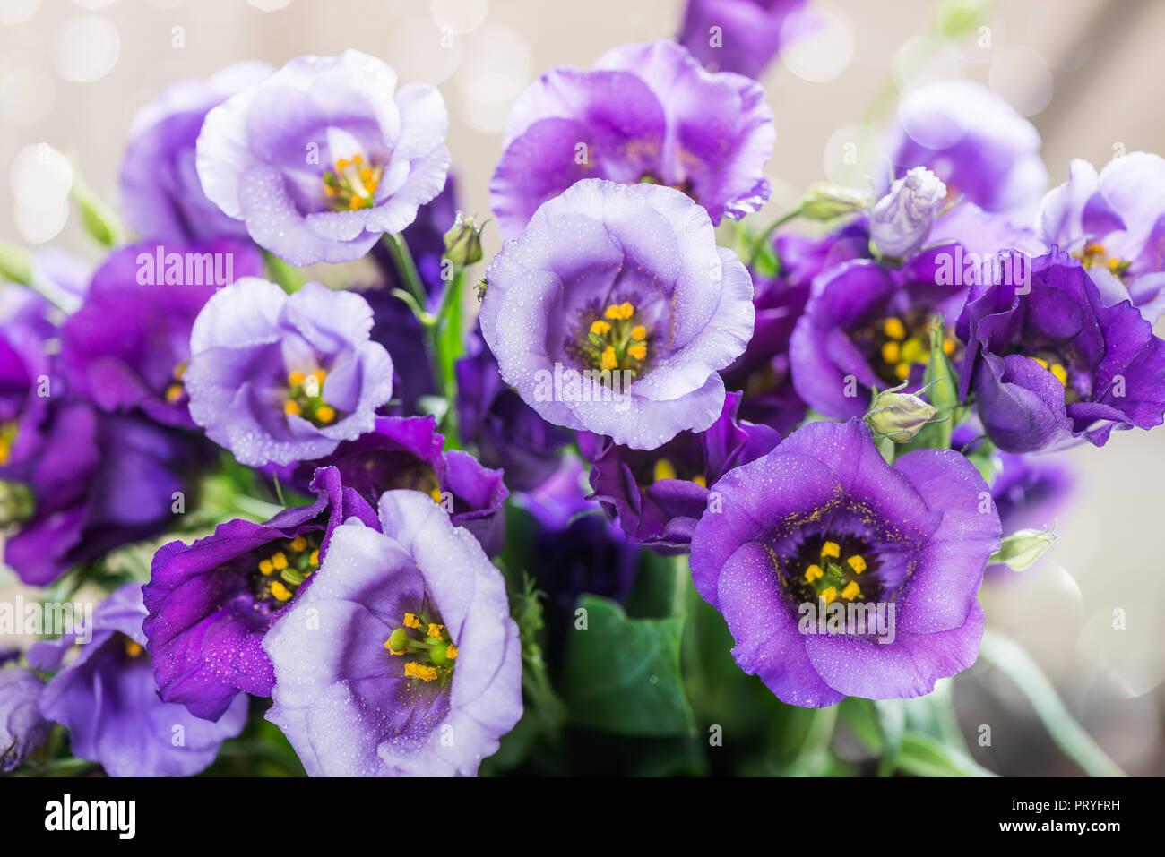 Beautiful Bouquet of Purple Eustoma flowers, Lisianthus, light background - Stock Image