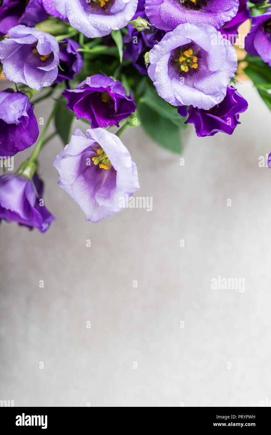 Beautiful Bouquet of Purple Eustoma flowers, Lisianthus, light background Stock Photo