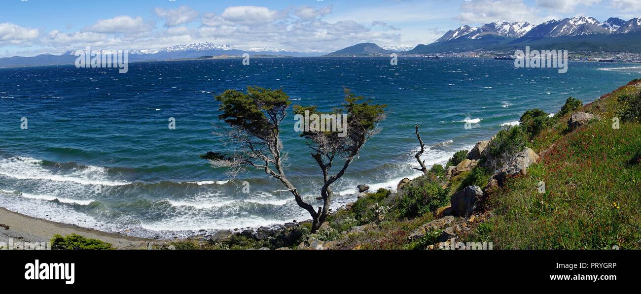 Tousled tree at the Beagle Canal, at the back harbour and town, Ushuaia, Tierra del Fuego Province, Tierra del Fuego, Argentina Stock Photo