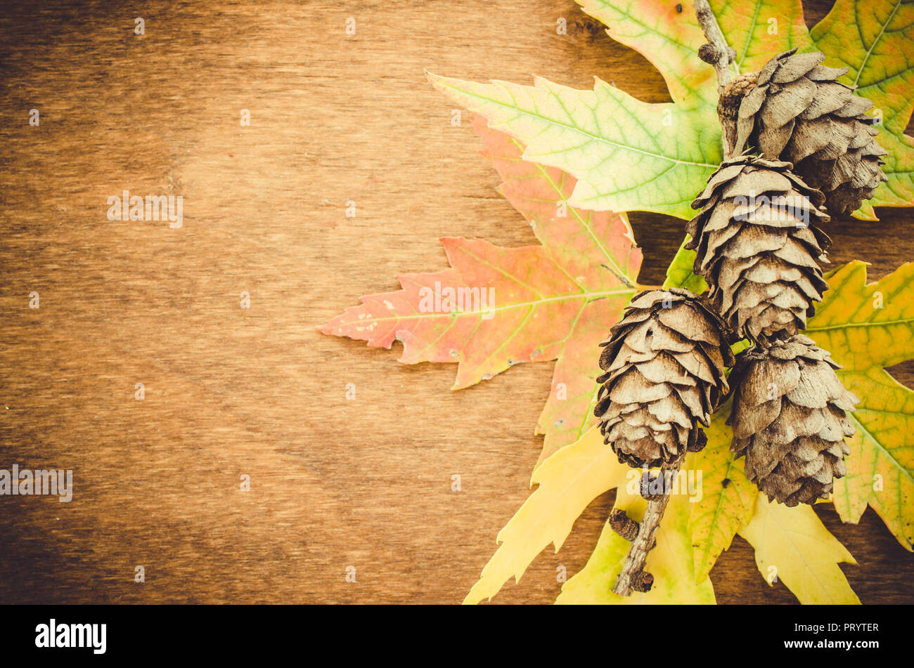 Autumn colored leaves and cones over old wooden background with copy space. Copy place for inscription, top view, tablet for text. Stock Photo
