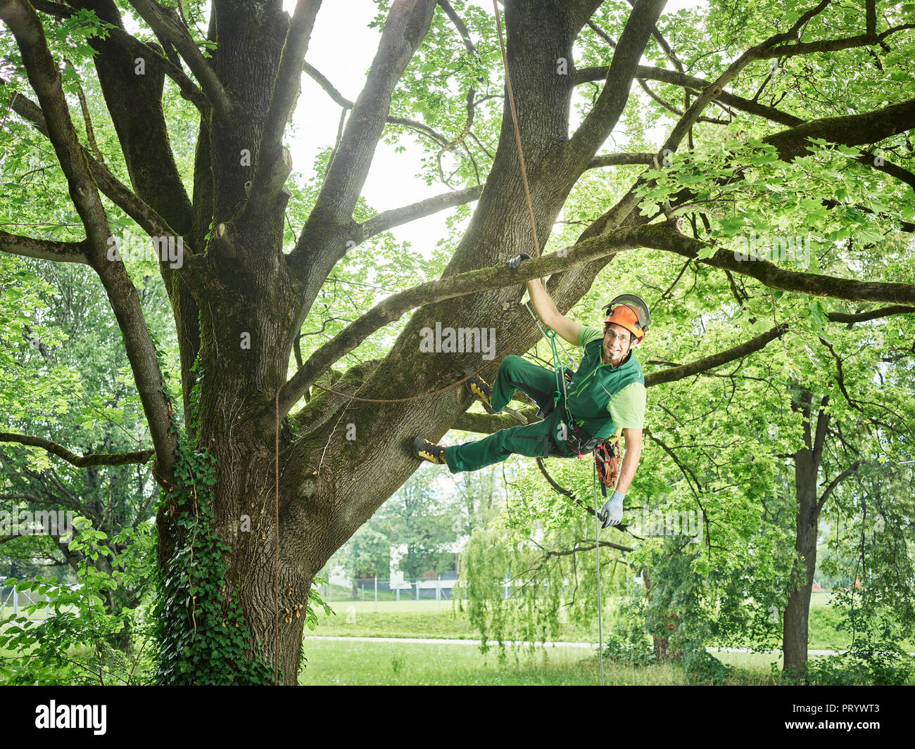 Tree cutter hanging on rope in tree Stock Photo