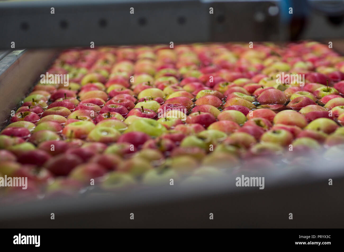 Apple factory, apples in water - Stock Image