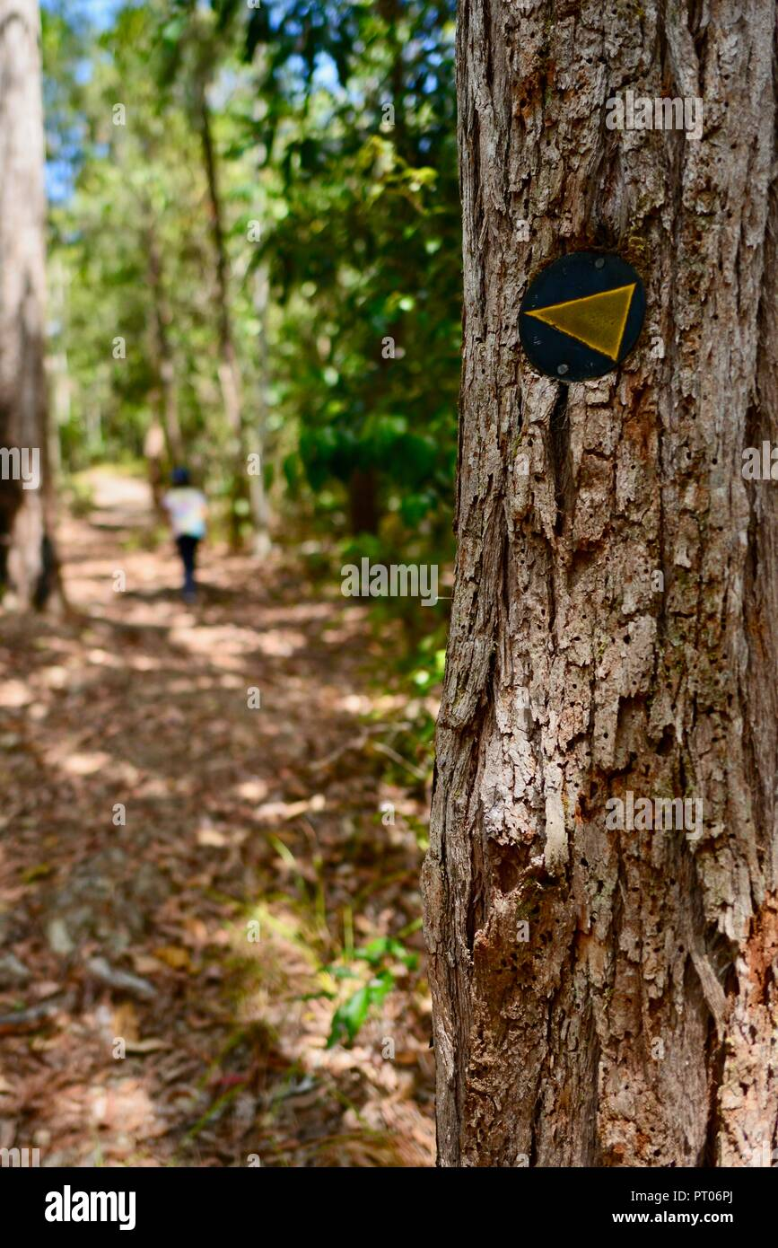 Kids walking through the woods, Dalrymple gap, QLD, Australia - Stock Image