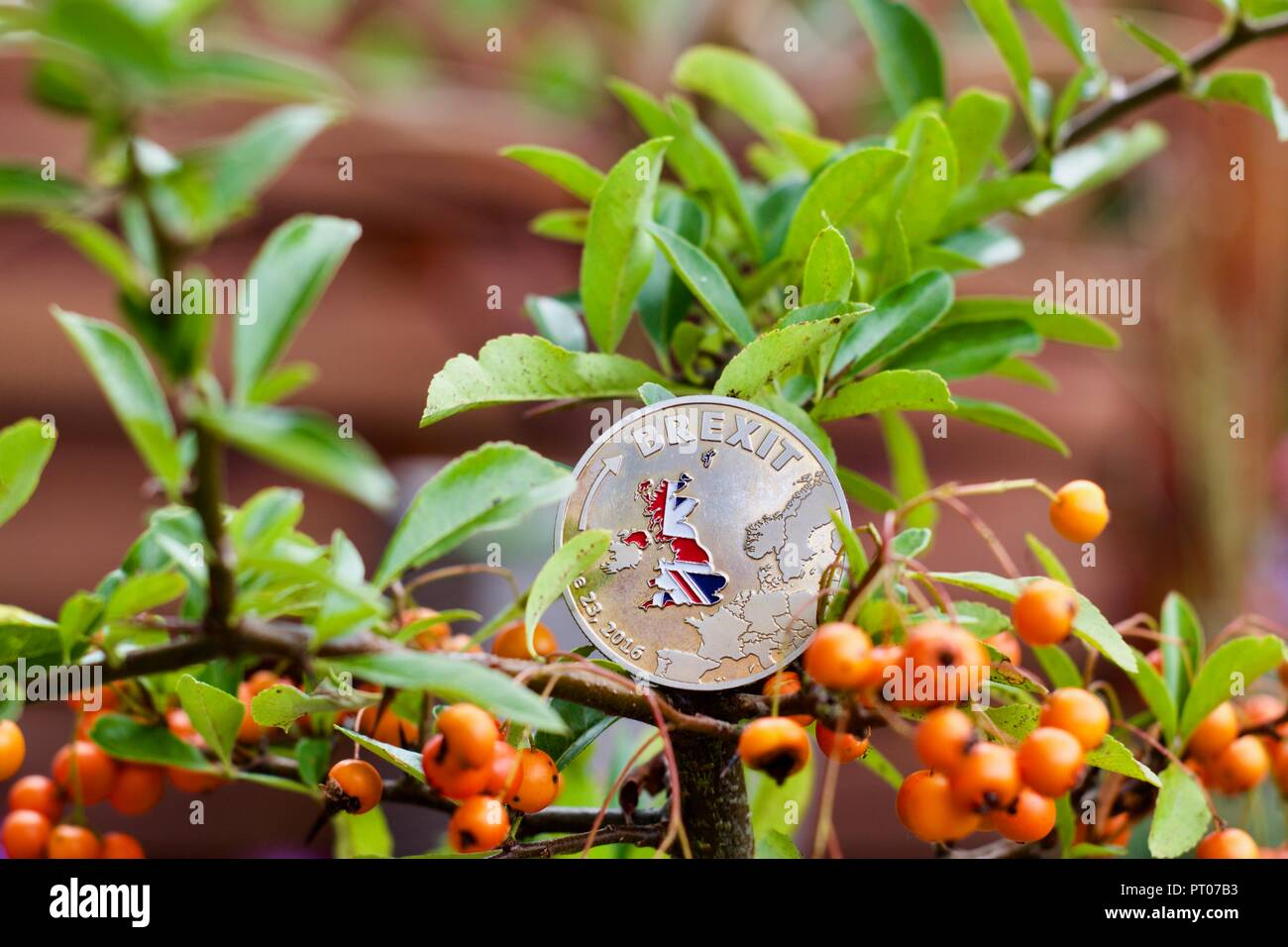 Brexit coin with british flag on the green tree. Brexit outdoor concept. Stock Photo