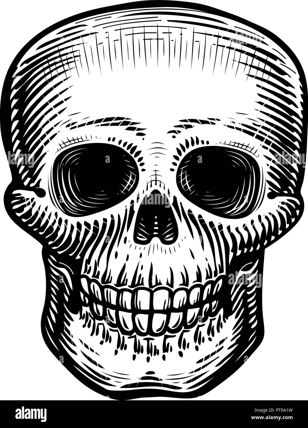dc4d96980458a Human skull, sketch. Hand-drawn skeleton, zombie or dead. Vintage vector