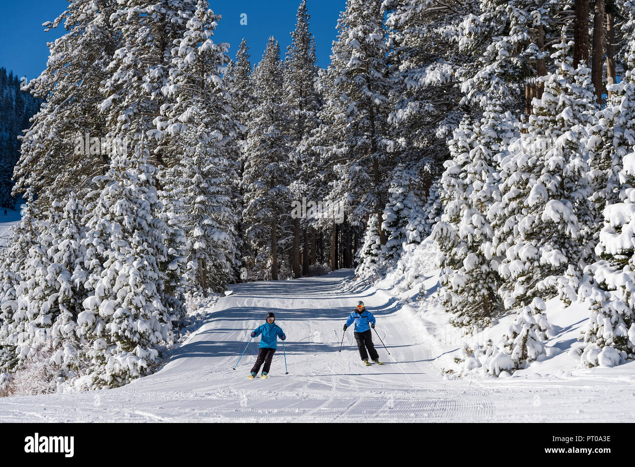 Fresh snowfall at Mt. Rose Ski Tahoe, the closest ski resort to Reno, Nevada in the mountains surrounding Lake Tahoe. Stock Photo
