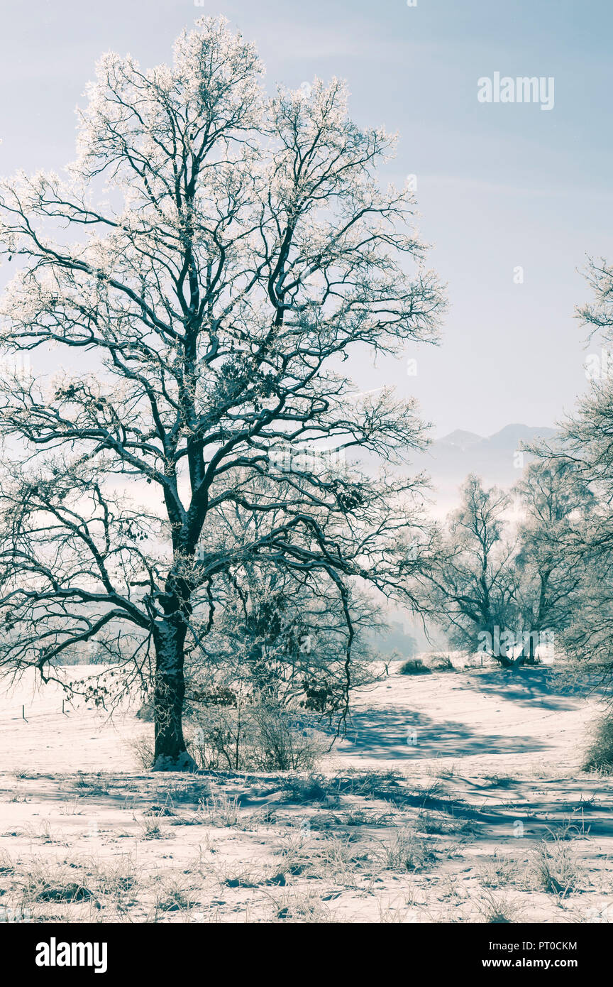 The winter, with ice, snow and trees in frosty coldness. - Stock Image