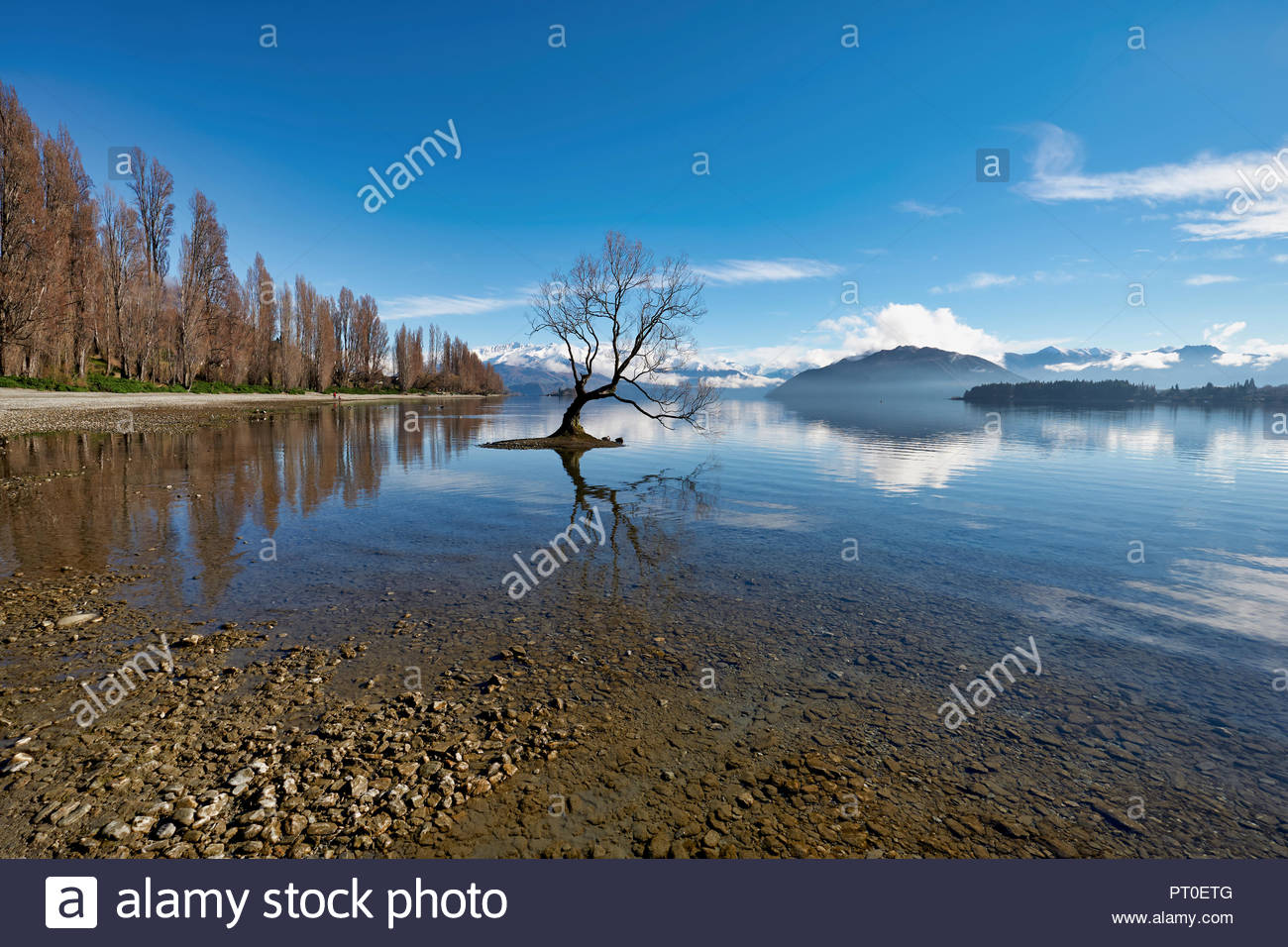 The iconic Wanaka Tree on Lake Wanaka. Otago New Zealand - Stock Image