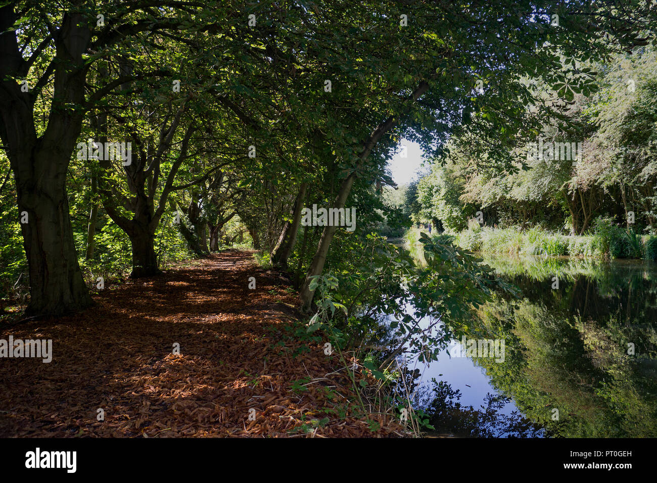 The River Stort in Harlow Essex, the tree lined path showing Autumn and the opposite bank with the Towpath remains in full summer mode. - Stock Image