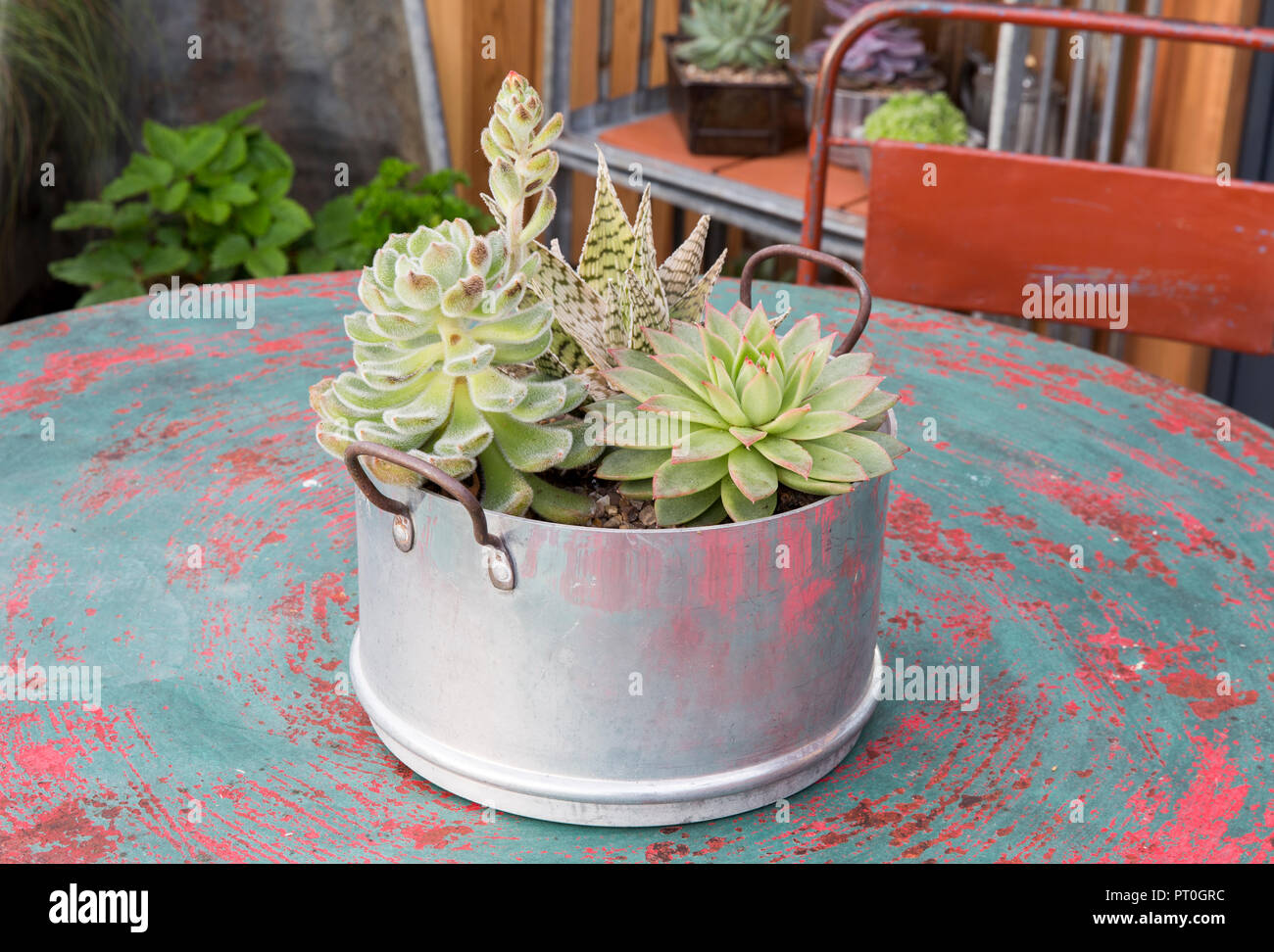 Succulents and sempervivum plants grown in old repurposed recycled cooking pot on outdoor table, unusual containers, Outside No 39 show garden, RHS Ma - Stock Image