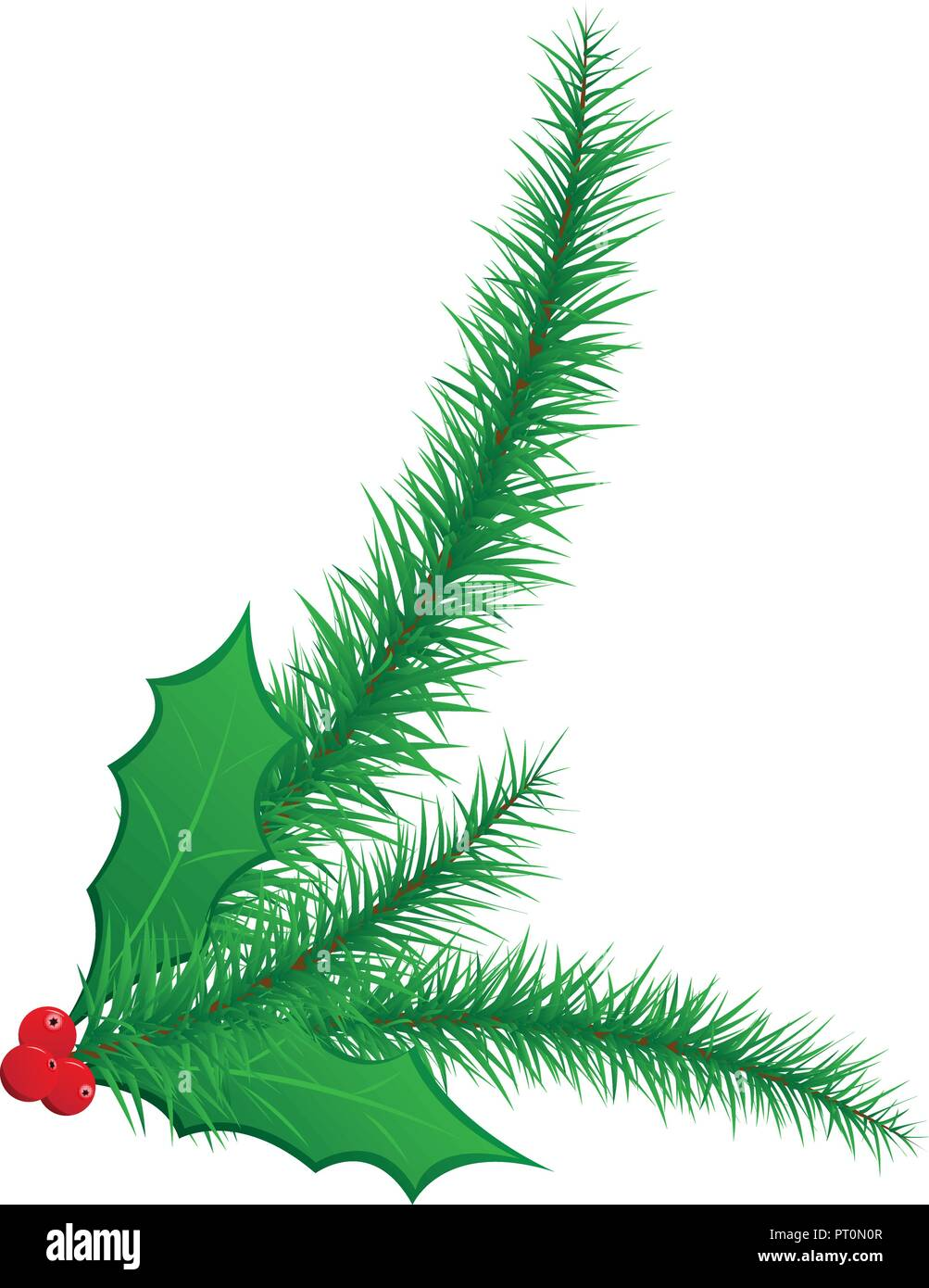 Green Christmas spruce pine needles with holly leaves and red berries illustration - Stock Vector
