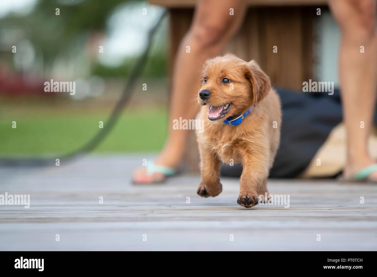 Puppy Energy Stock Photos & Puppy Energy Stock Images - Alamy