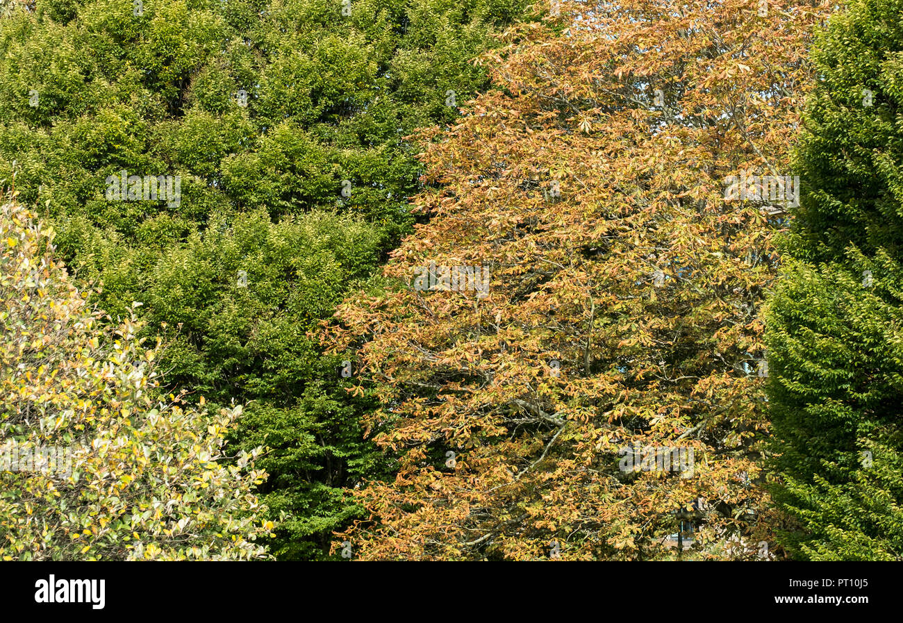 Different types of tree changing colour in Autumn - Stock Image