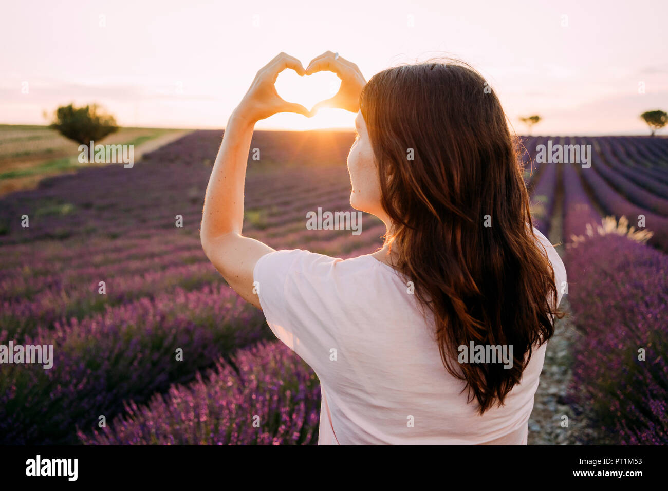 France, Valensole, back view of woman shaping heart with her hands in front of lavender field at sunset - Stock Image