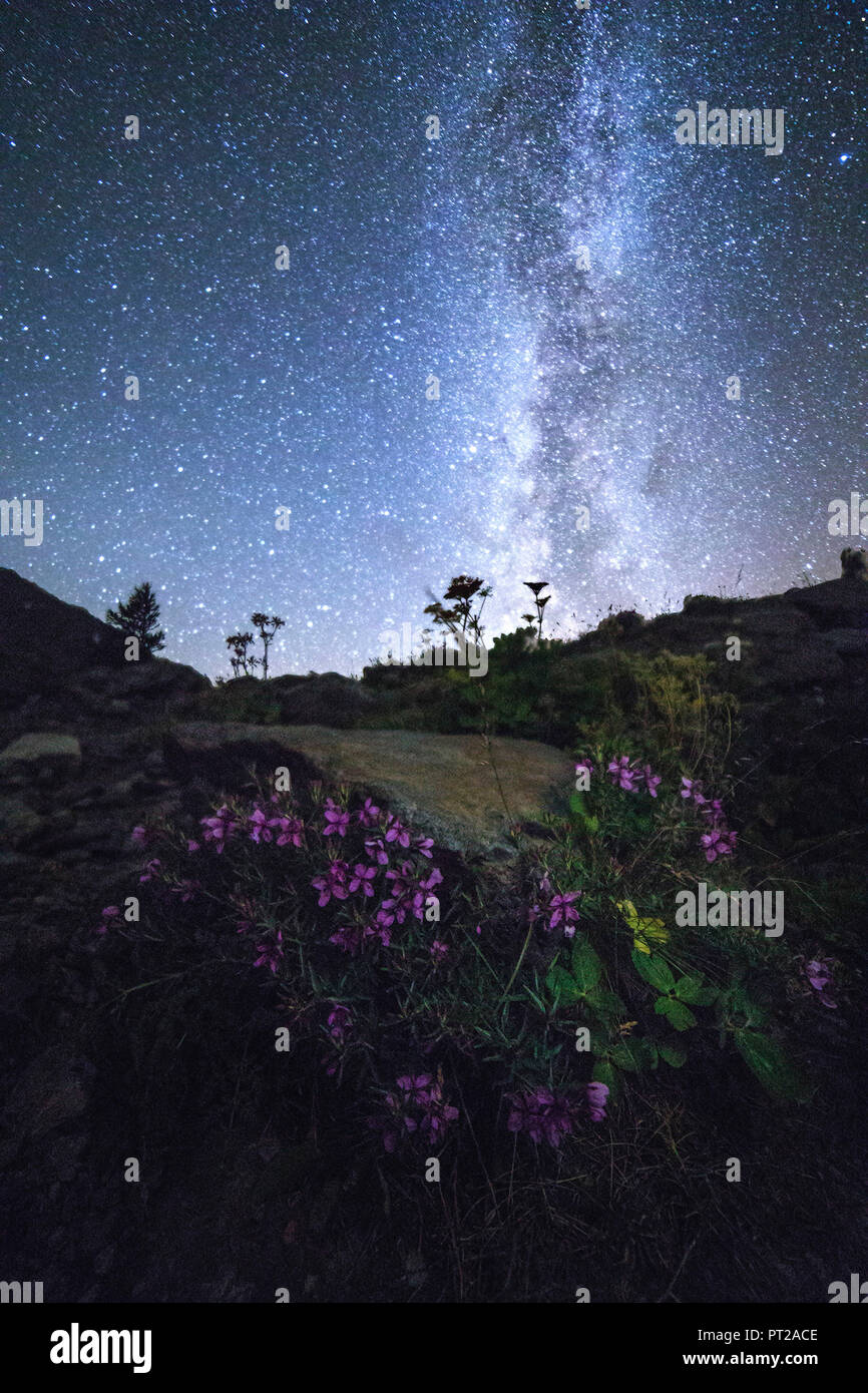 Milky Way and flowers at Lake Miage, Val Veny, Aosta Valley, Italy - Stock Image