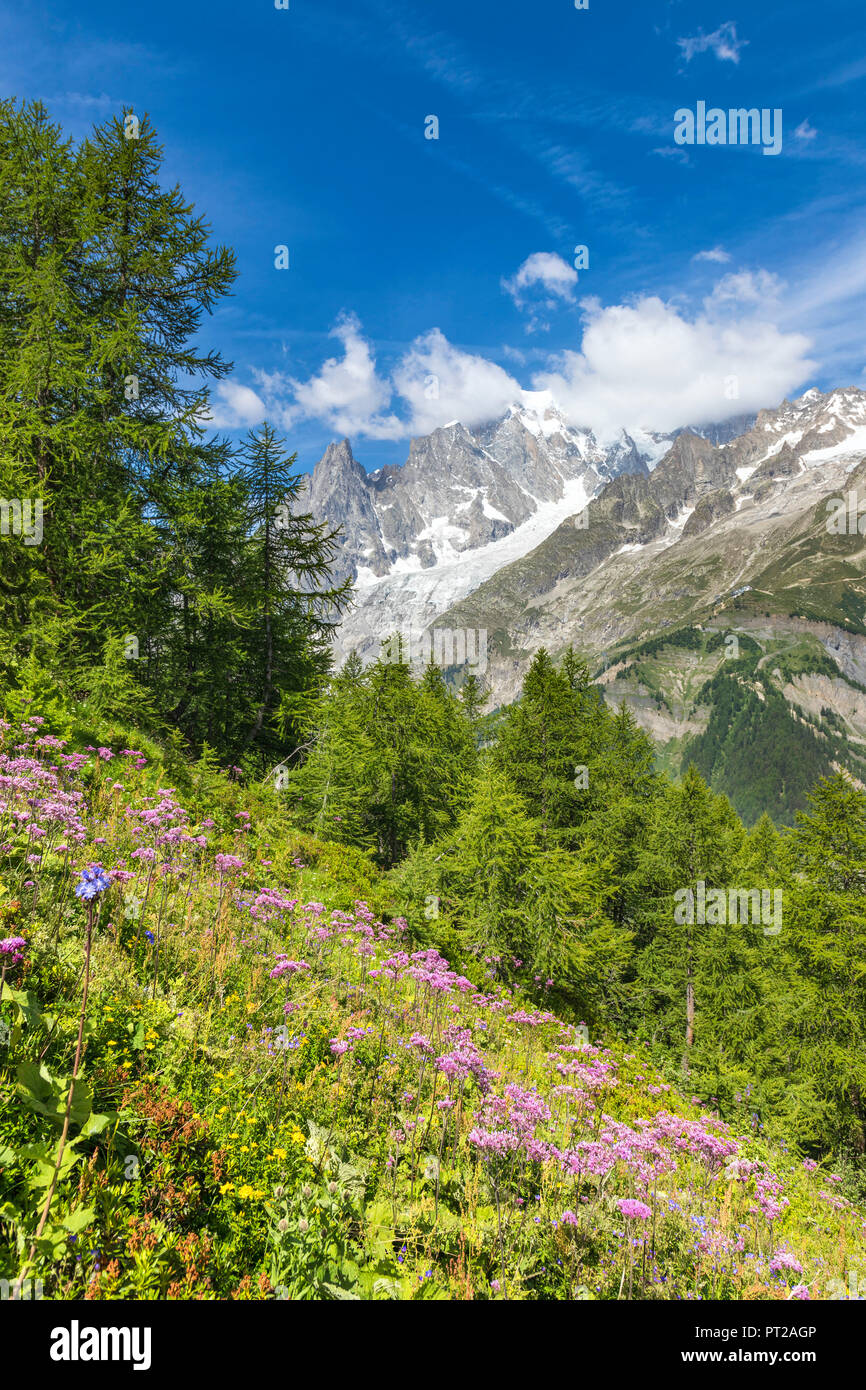 A view of the Mont Blanc Massif from the path to the Bertone Refuge during the Mont Blanc hiking tours (Ferret Valley, Courmayeur, Aosta province, Aosta Valley, Italy, Europe) Stock Photo