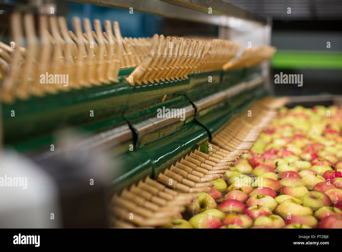 Apples being cleaned by machine - Stock Image