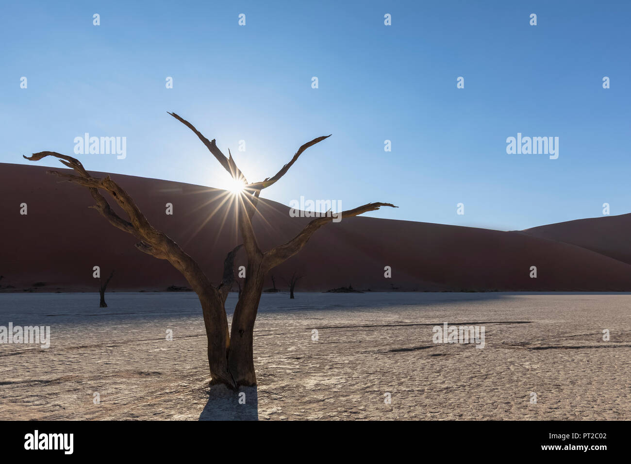 Africa, Namibia, Namib-Naukluft National Park, Deadvlei, dead acacia tree in clay pan - Stock Image