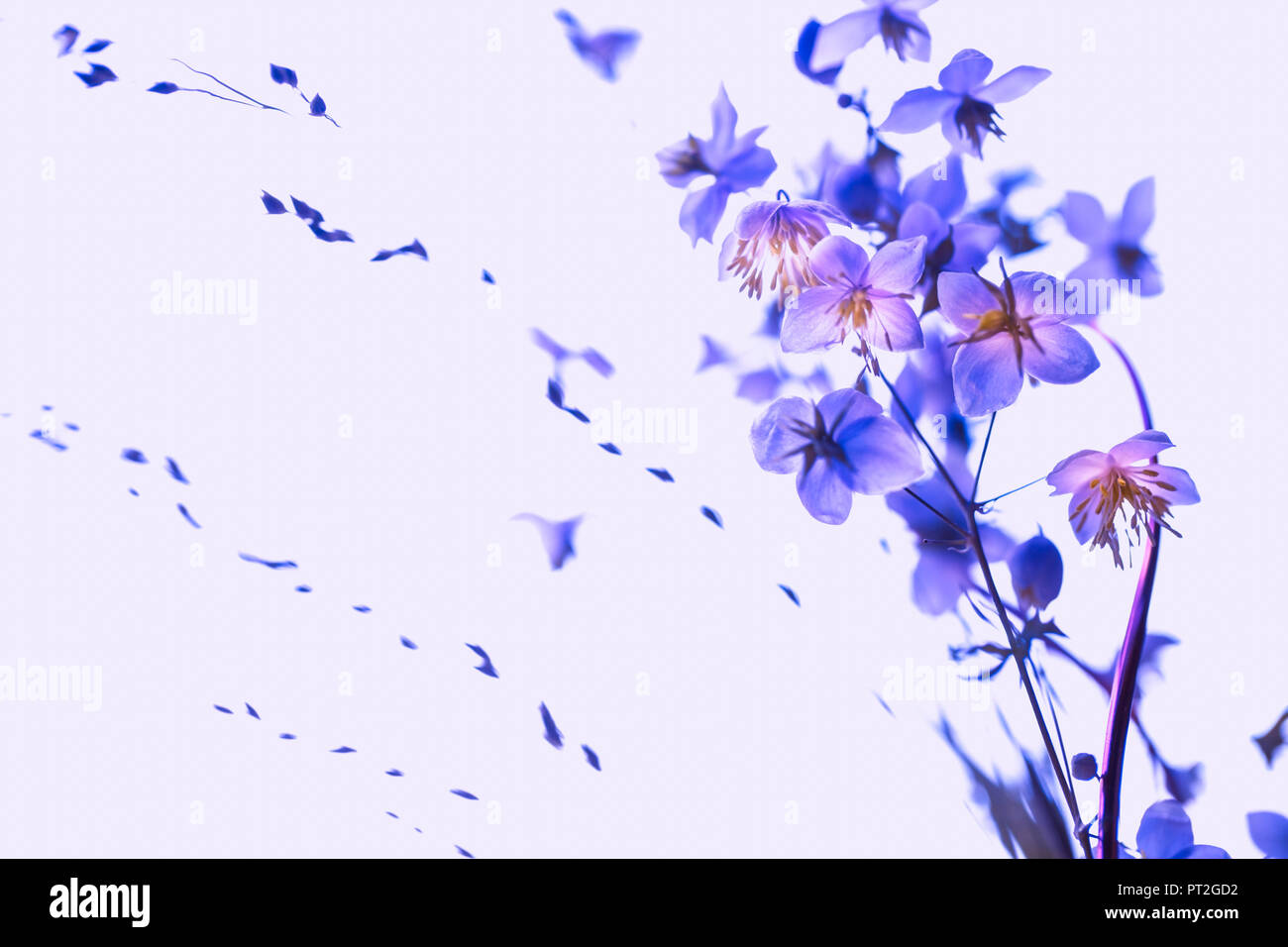 Small flowers coming out big - ultraviolet, pastel, soft and romantic. - Stock Image