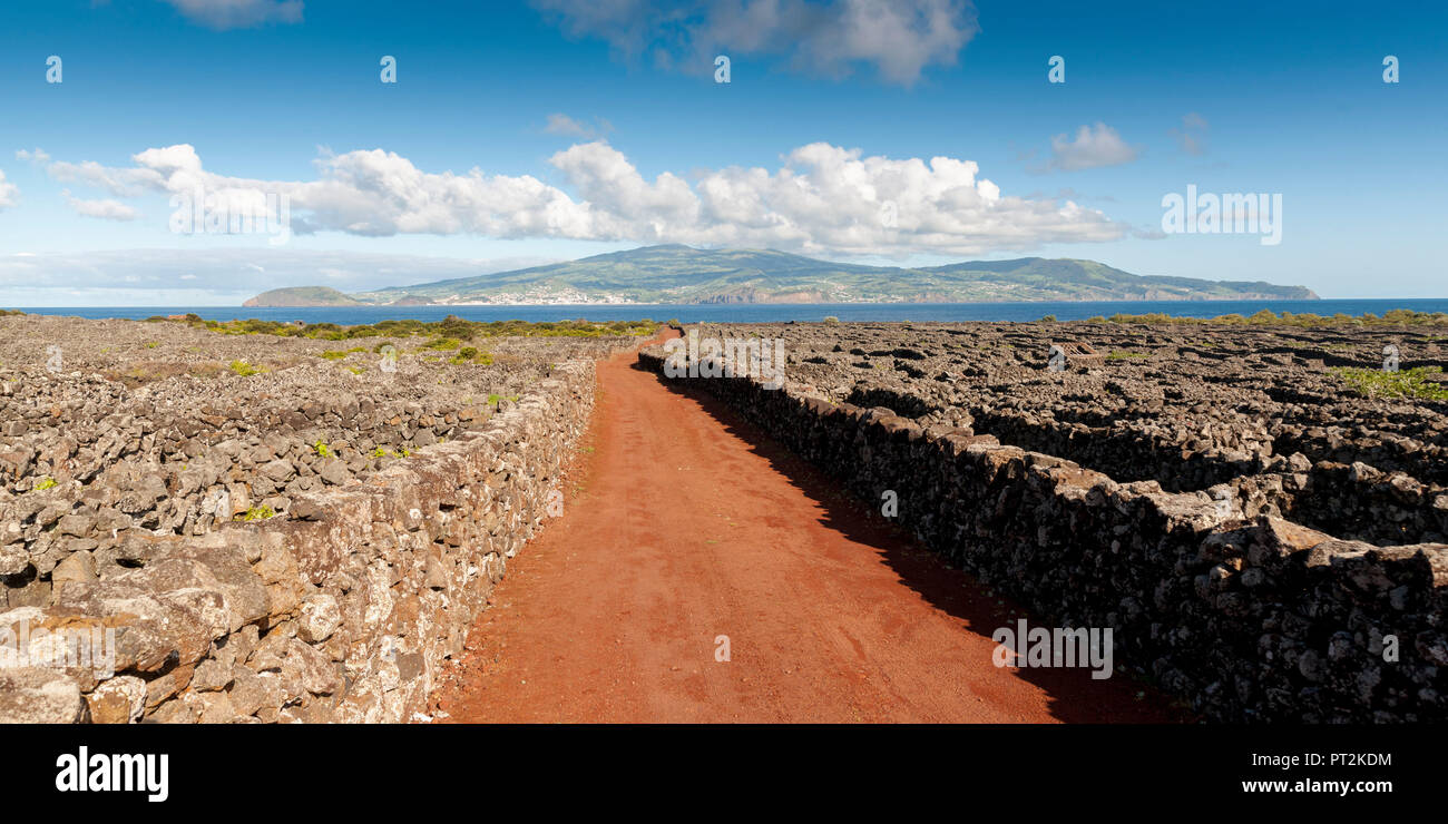 Red track through vineyards bordered by volcanic stone walls, view from Pico to the neighboring island Faial - Stock Image