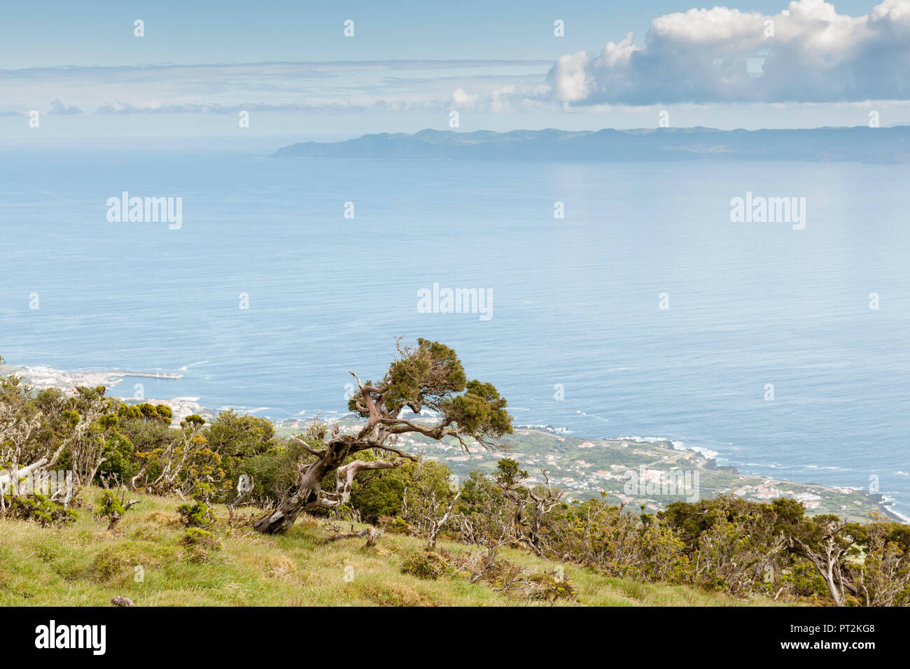 View from the ridge of the island Pico, underlying coast with windblown trees and neighboring island Sao Jorge - Stock Image