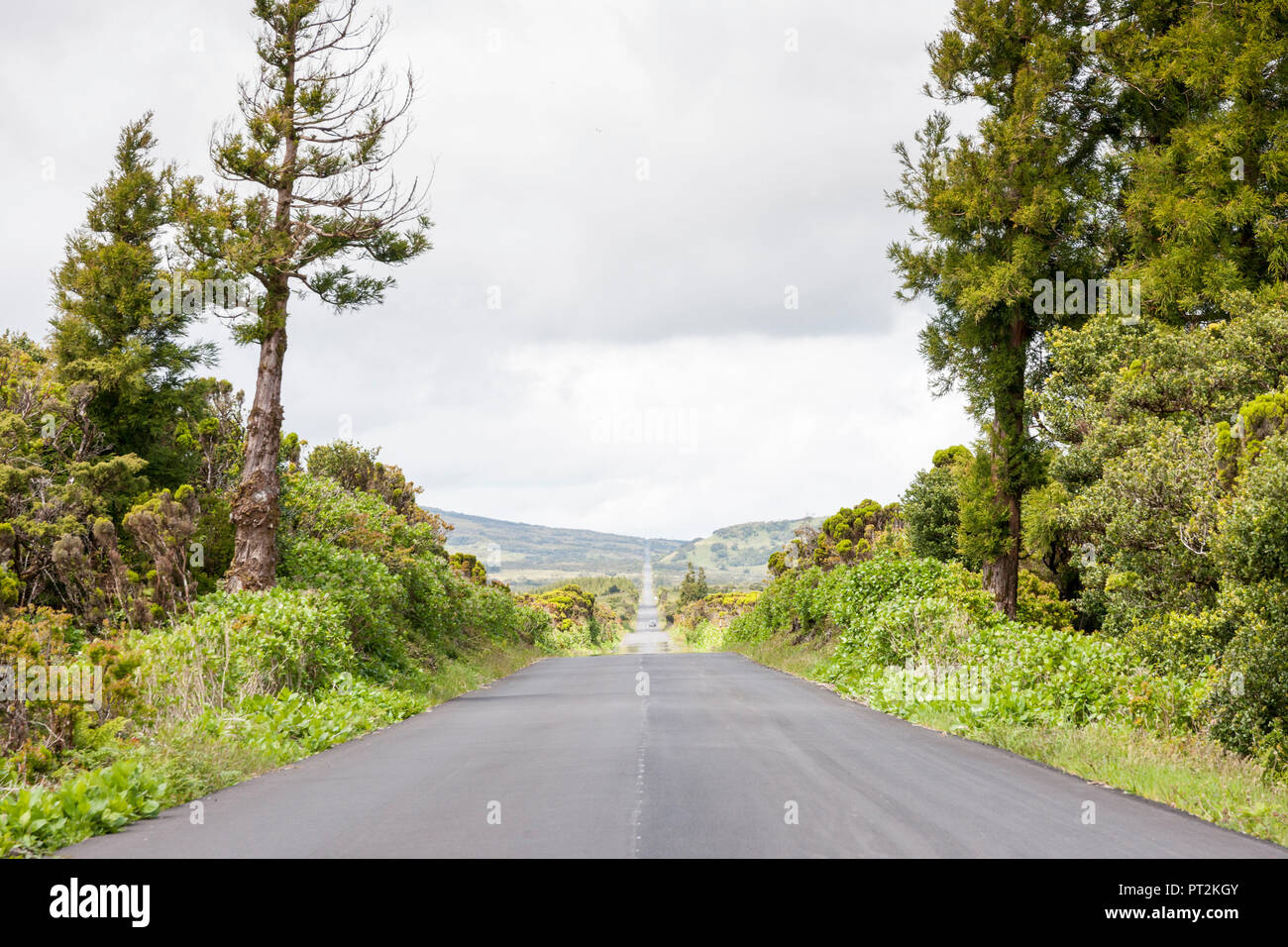 empty road in the endless vastness through the green highlands of Azores island Pico, Transversale from Magdalena to Piedade - Stock Image