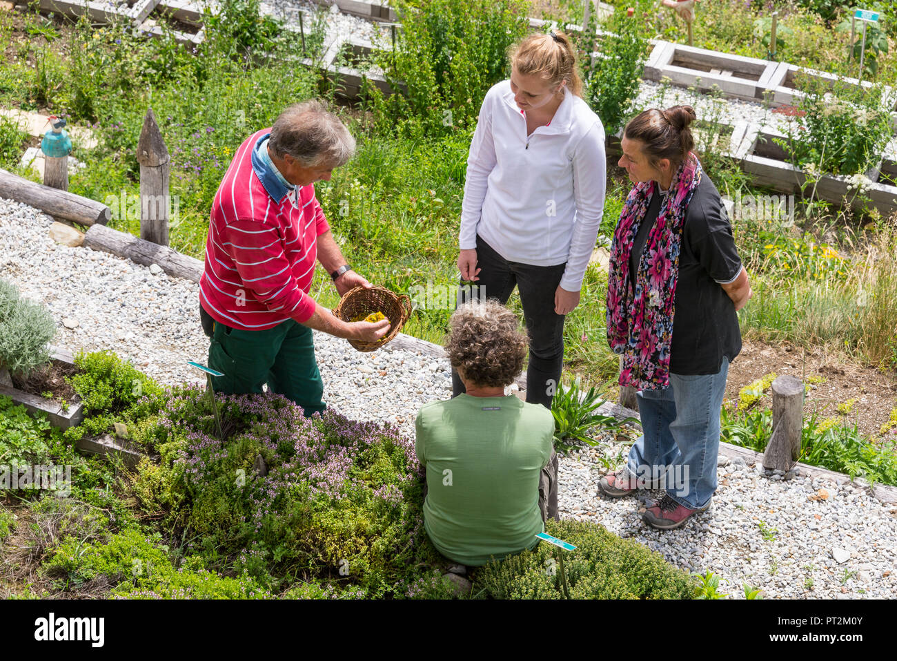 Switzerland, canton Valais, district Leuk, Albinen, medicinal plant garden, book author and herbal expert Thomas Pfister, medicinal herb school, herbal walk, medicinal herbs, herbal class, man explaining the herbs to a group of people - Stock Image