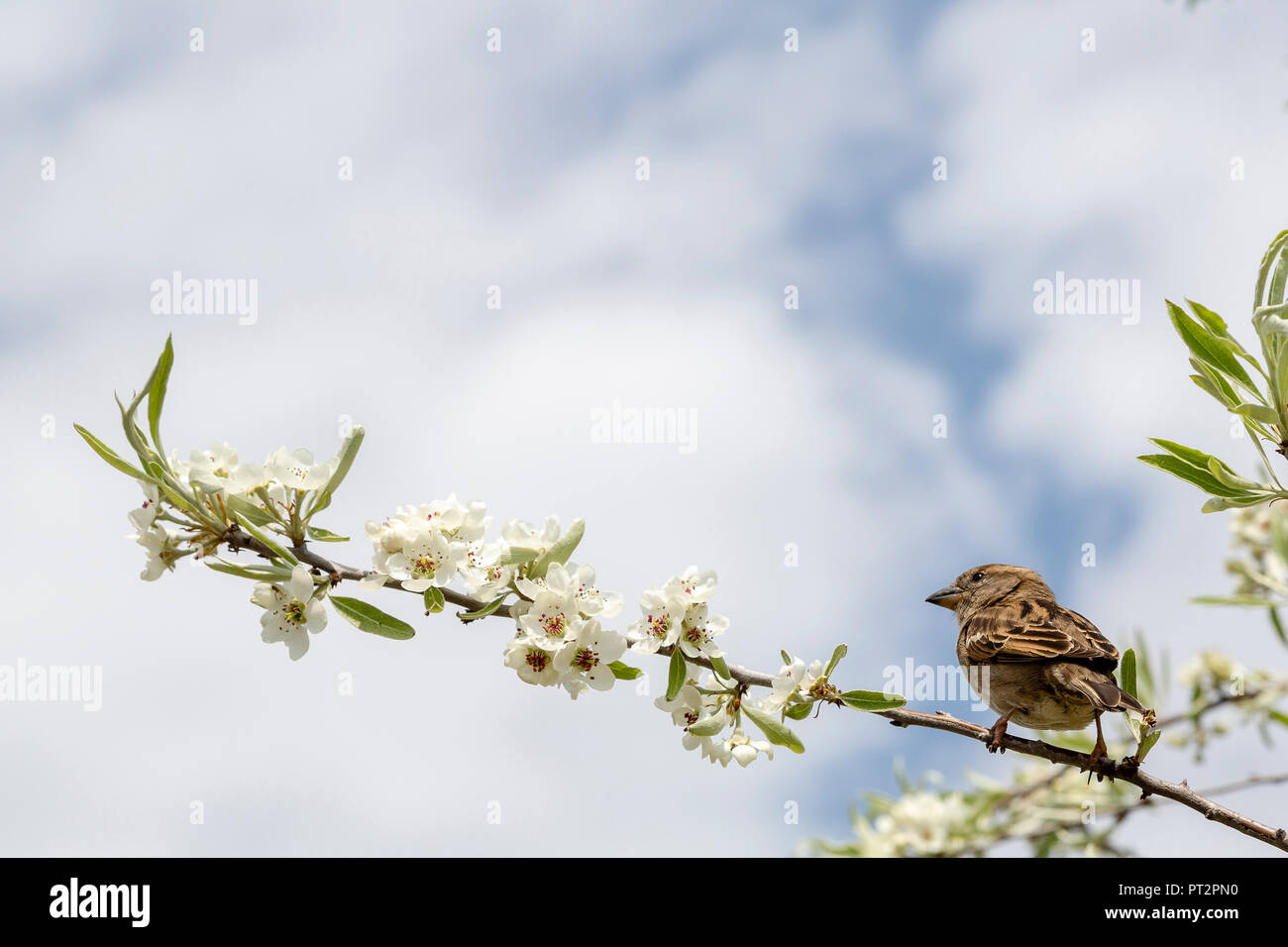 Bird on a branch of a tree - Stock Image
