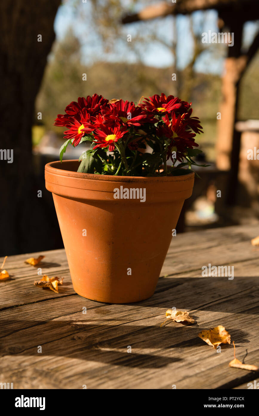 Beer Garden Table Decoration Flower Pot With Red Chrysanthemums