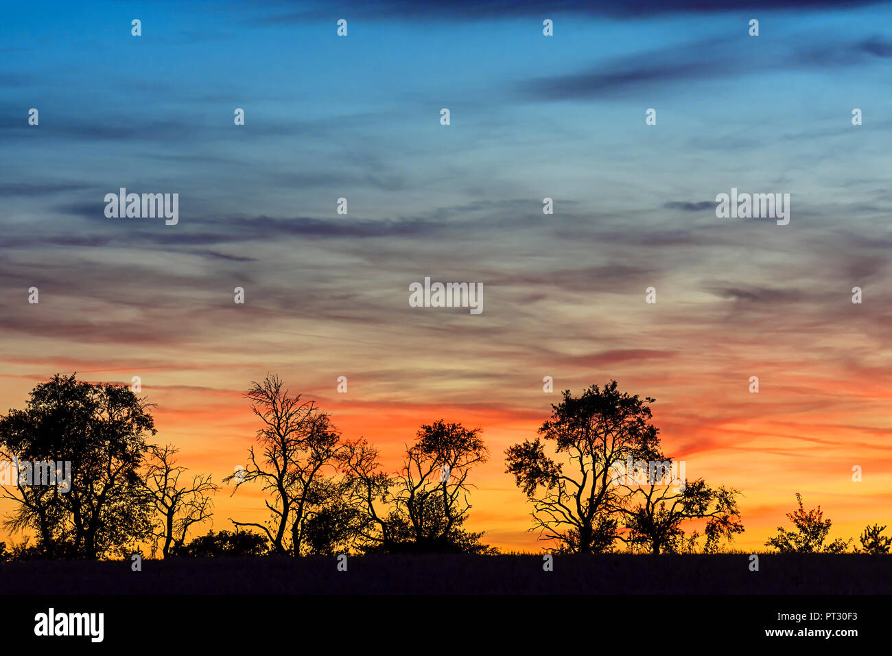 Tree silouettes at sunset, Bavaria, Germany - Stock Image