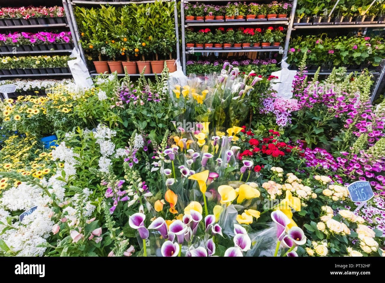 England, London, Columbia Road Flower Market - Stock Image