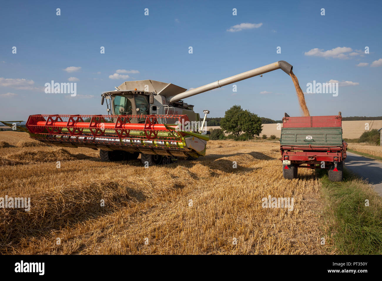 Wheat harvest on the Haarstrang in Soester Börde, in hot dry summer 2018, Germany, - Stock Image