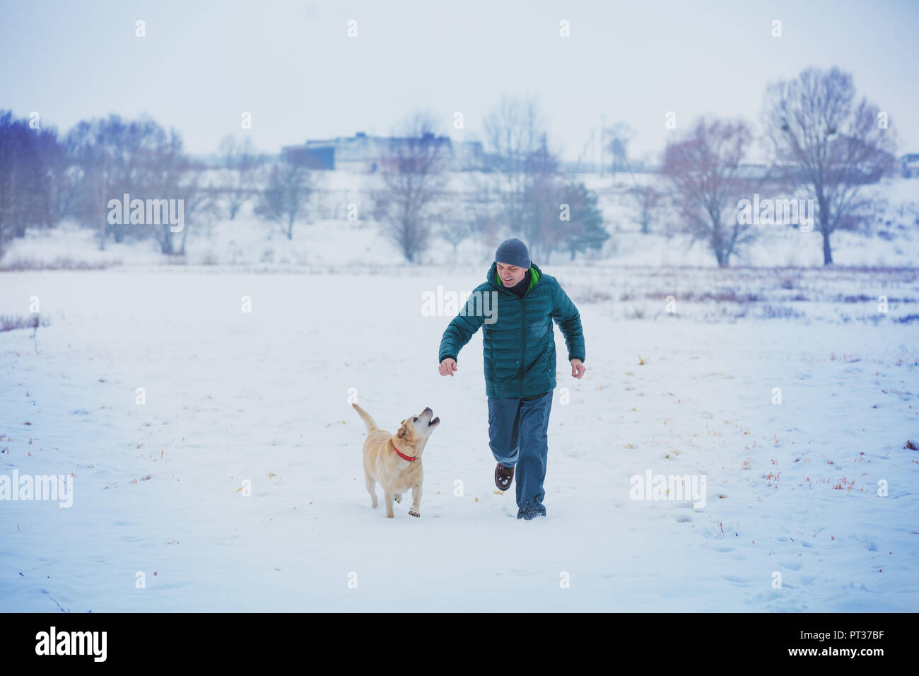 Happy man with a labrador retriever dog running through a snowy field in winter Stock Photo