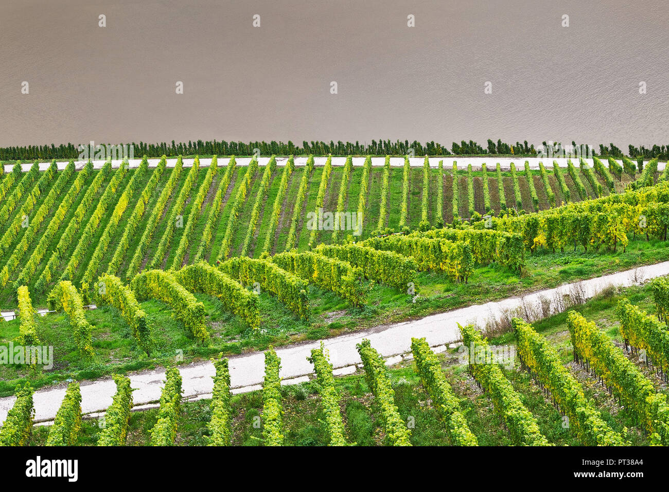 Vineyard at the Moselle overlooking the river. - Stock Image