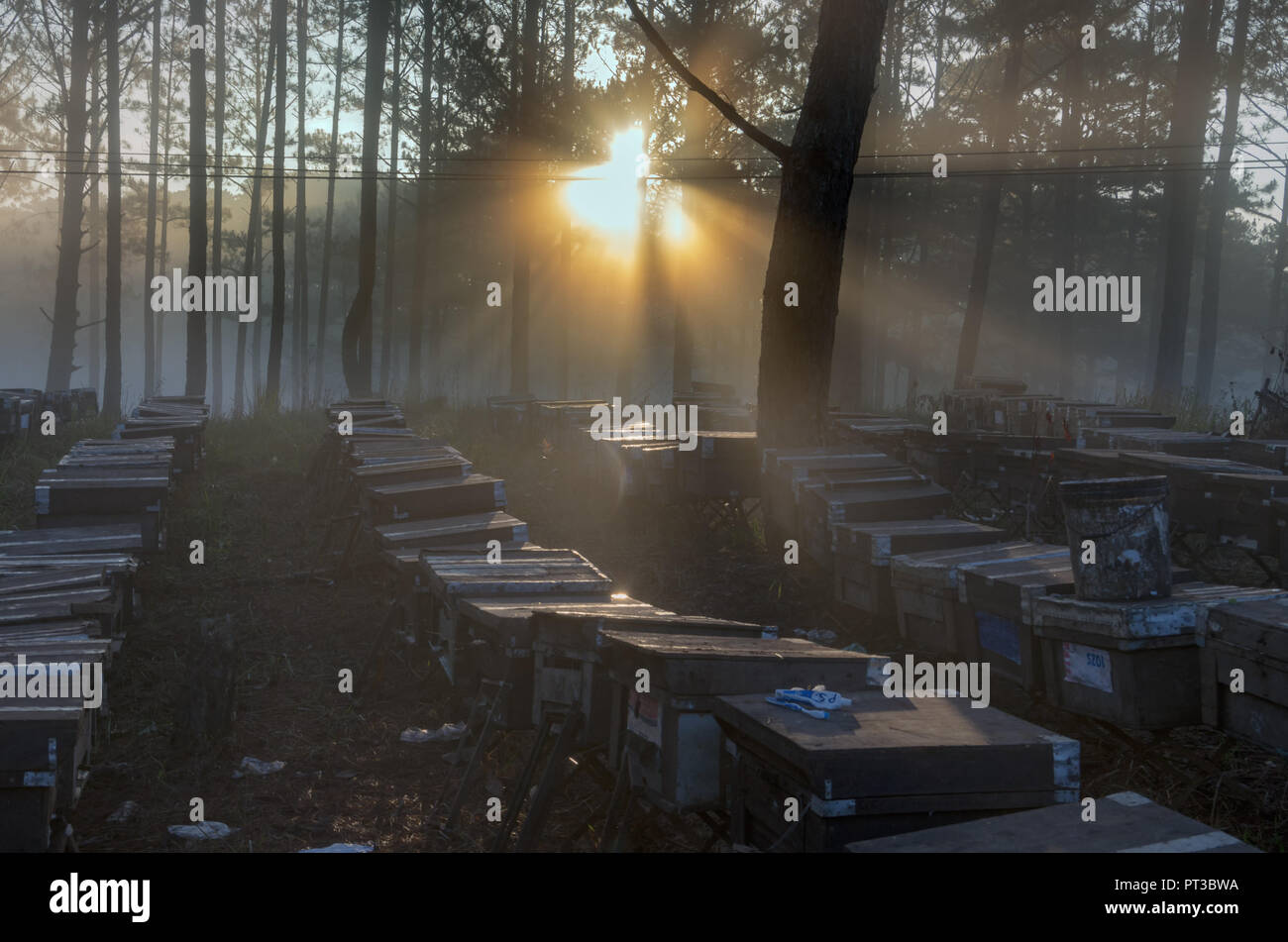 The bee farm, beekeepers, environmental friendly nature. Photo taken at the sunrise with best sunrays, magic of the light, sunshine and fog - Stock Image