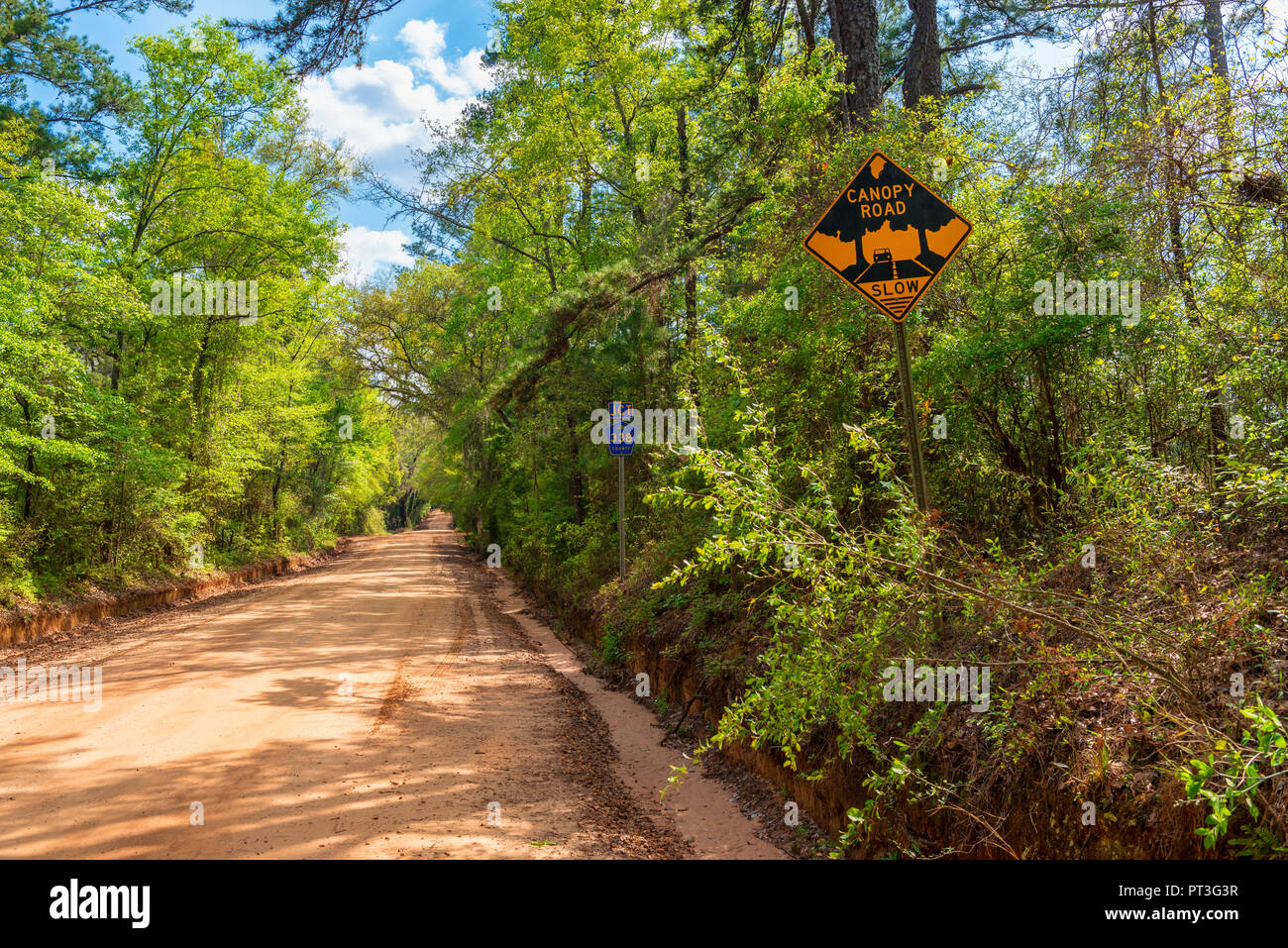 Canopy Road in Leon County Florida USA, close to the border with Georgia Stock Photo