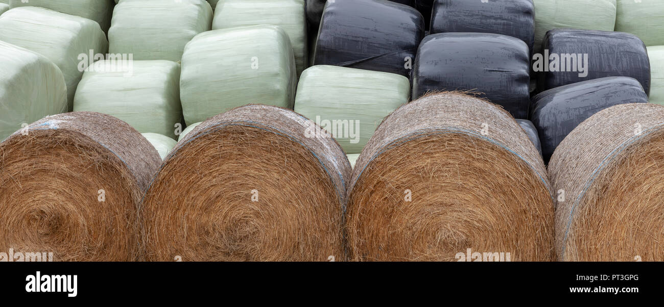 Stacked silage bags, green and black behind a row of unwrapped haylage bales - Stock Image