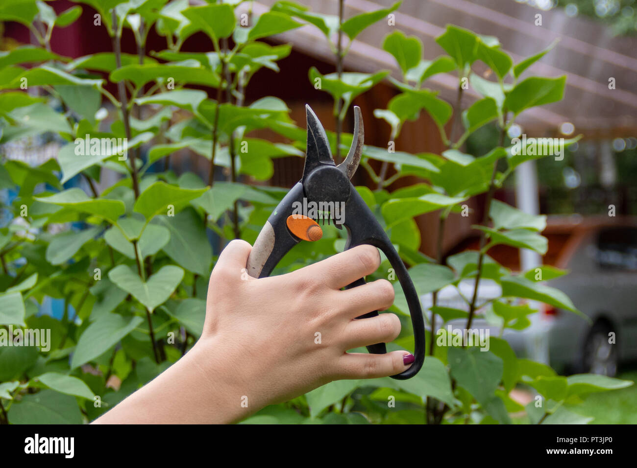 Garden tool pruner in woman hand on branch background - Stock Image