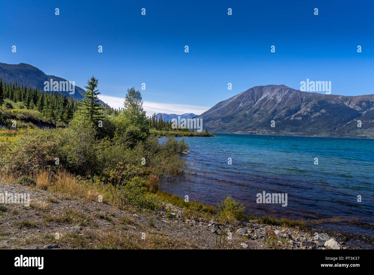 Beautiful scen of Benett Lake,  beach in Carcross, Yukon Canada - Stock Image