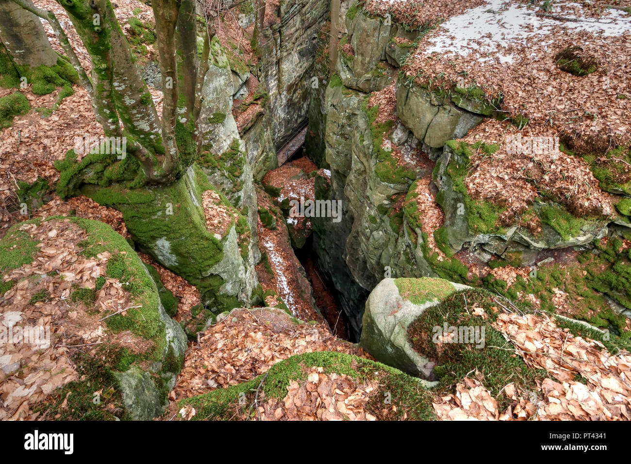 View into crevice, Teufelsschlucht bei Ernzen, Sudeifel, Rhineland-Palatinate, Germany - Stock Image