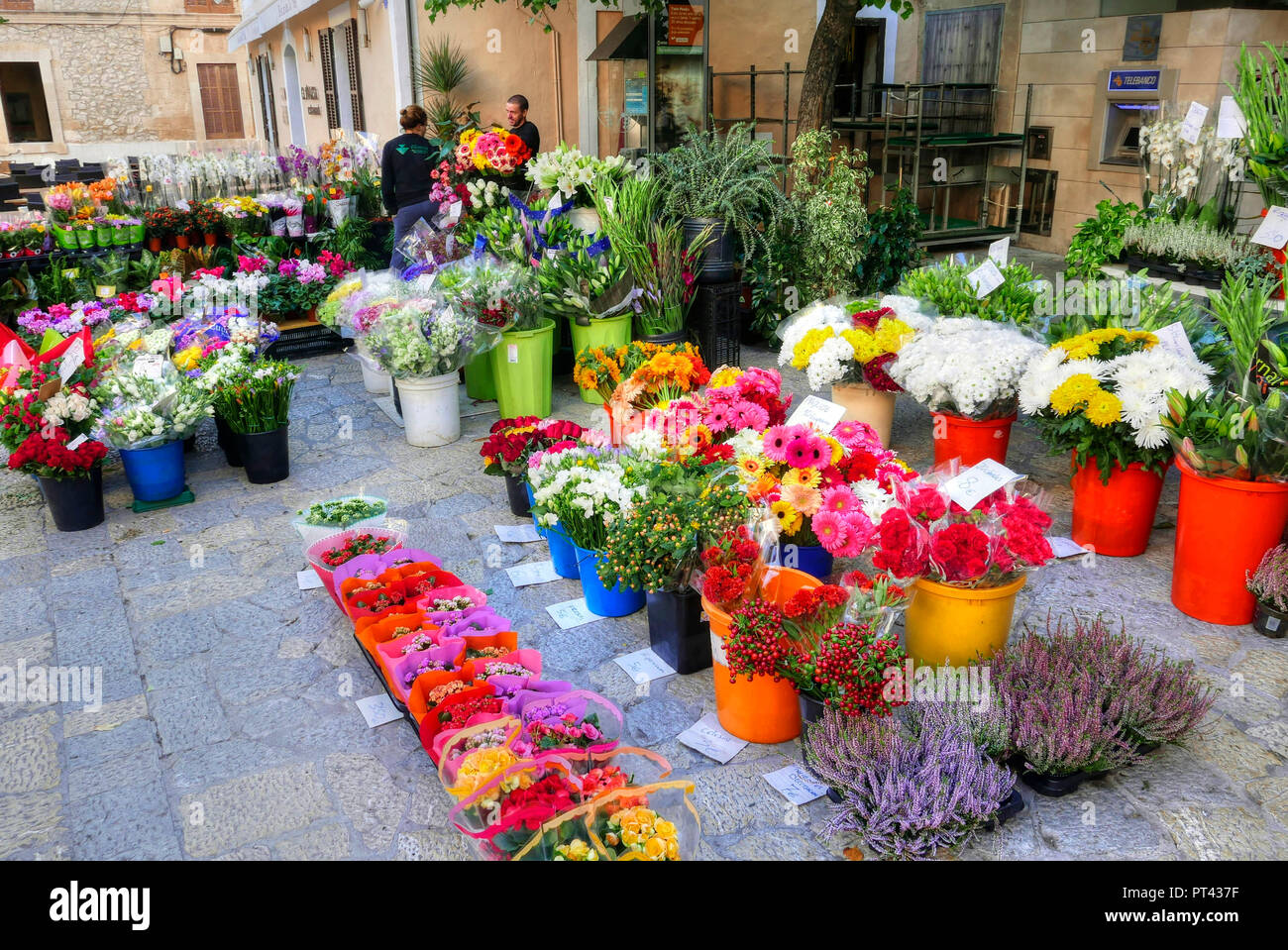 Flower stand on the Sunday market in Pollenca, Mallorca, Balearic Islands, Spain - Stock Image